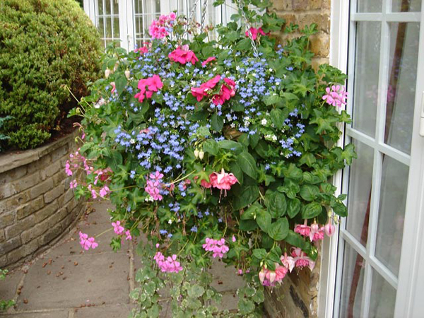 pink and blue Hanging Baskets - Garden Landscaper Surrey